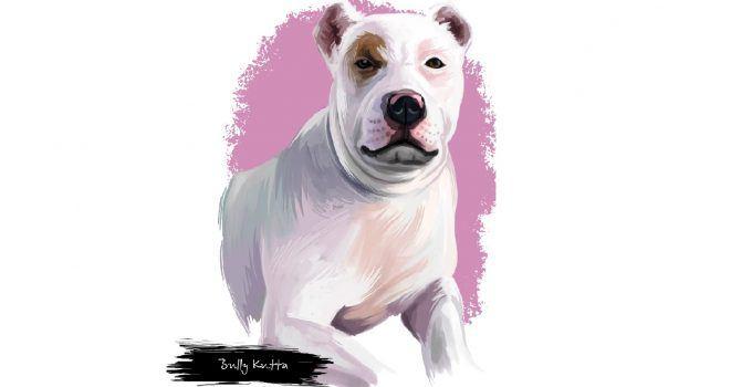 bully kuta cachorro