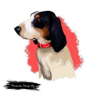 Cão do Ariége